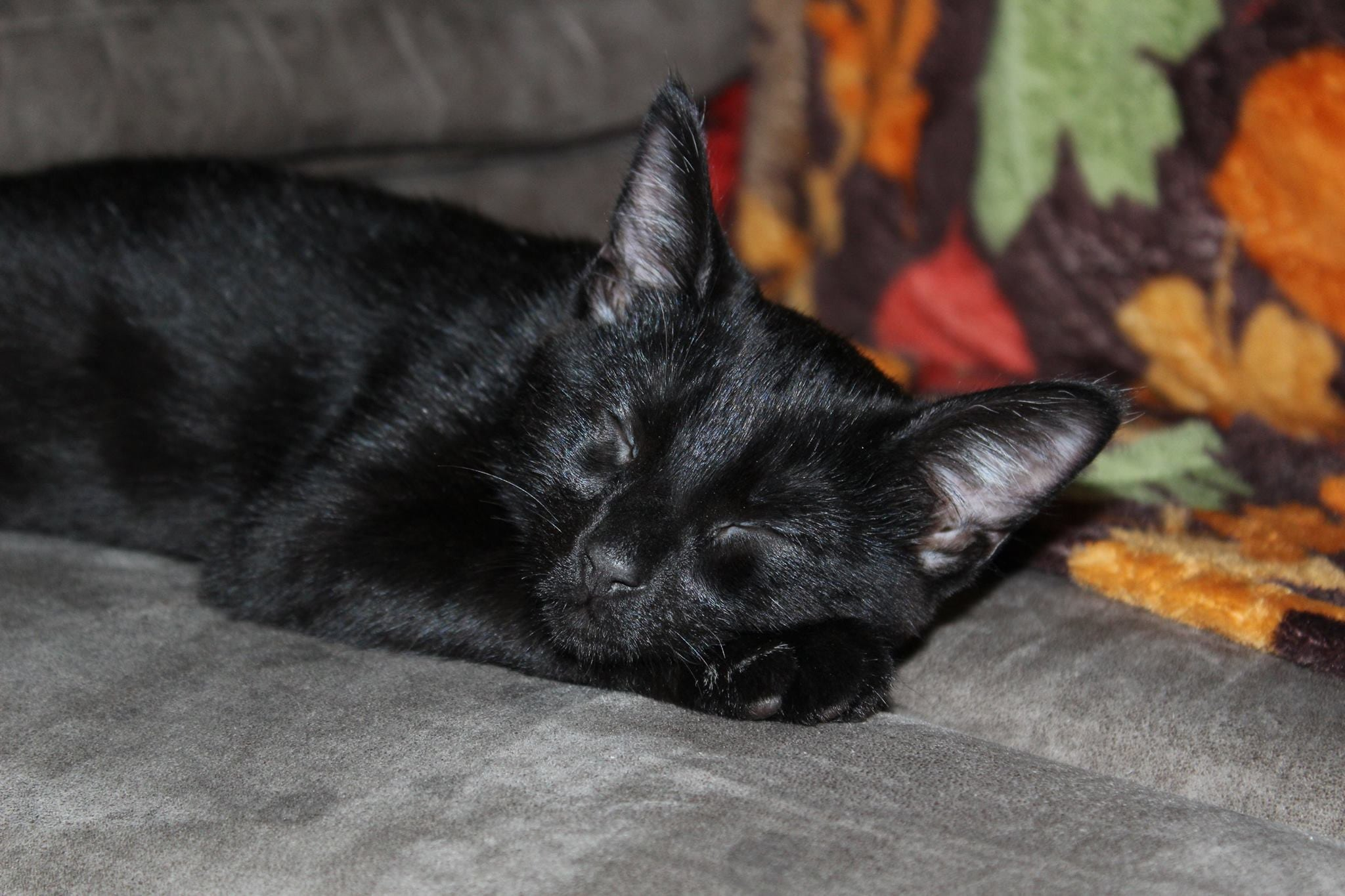 black cat sleeping on couch