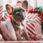 christmas money saving tip