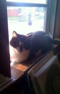 black and white cat sitting in window sill