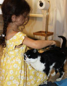 brunette child in yellow dress brushing black and white cat