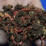 diy worm farm tote