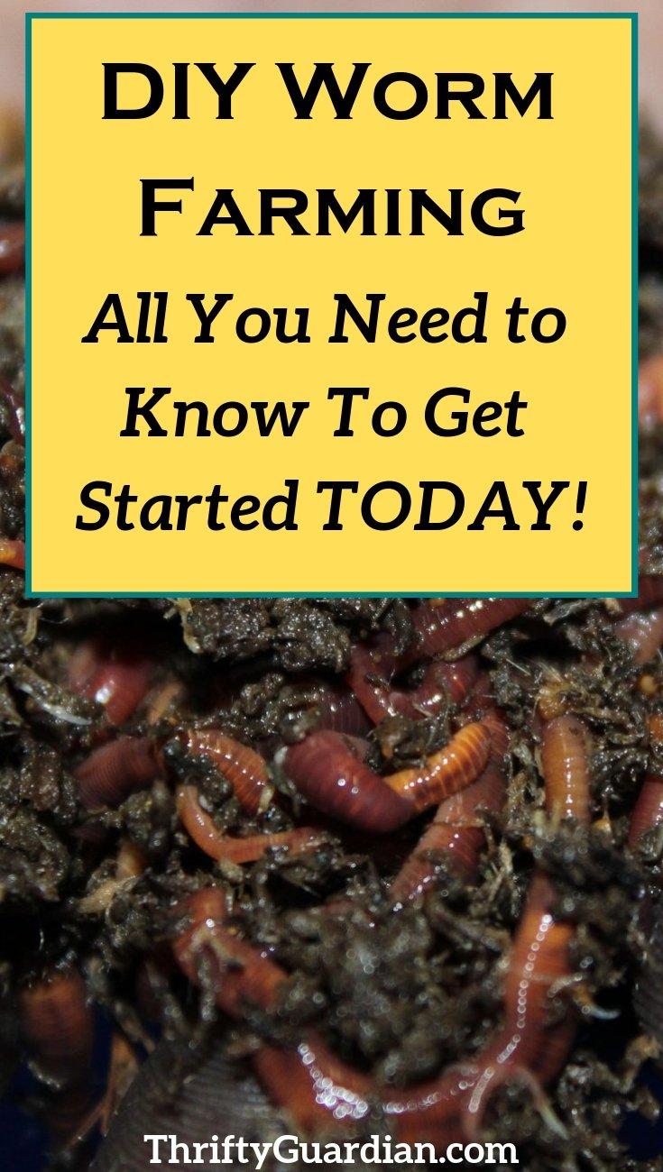 diy worm farm